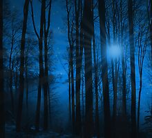 IN THE WOODS AT NIGHT by imagetj