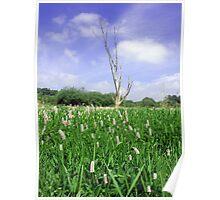 Barren tree in middle of field of flowers Poster