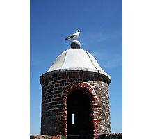 Seagull Turret Photographic Print