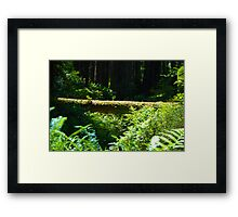 Redwoods Revisited Framed Print