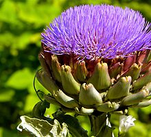 artichoke how we rarely see it by mamba