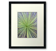 Australian Grass Tree Framed Print