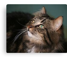 Meet Whiskers Canvas Print
