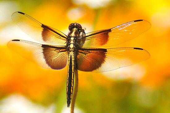 Dragonfly Marmalade by Kenneth Haley