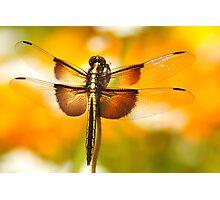 Dragonfly Marmalade Photographic Print