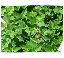 Red Wasp Striding Mightily Poster
