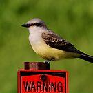 Western Kingbird by Larry Trupp