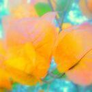 Autumn Gold by Melissa Park