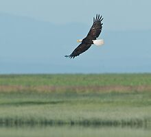 Eagle in the Sky by David Friederich