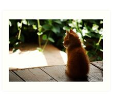 Sitting Kitten Art Print