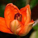 Textured Orange  by Stormygirl