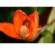 Textured Orange  Photographic Print
