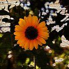 Sunflower by Stormygirl