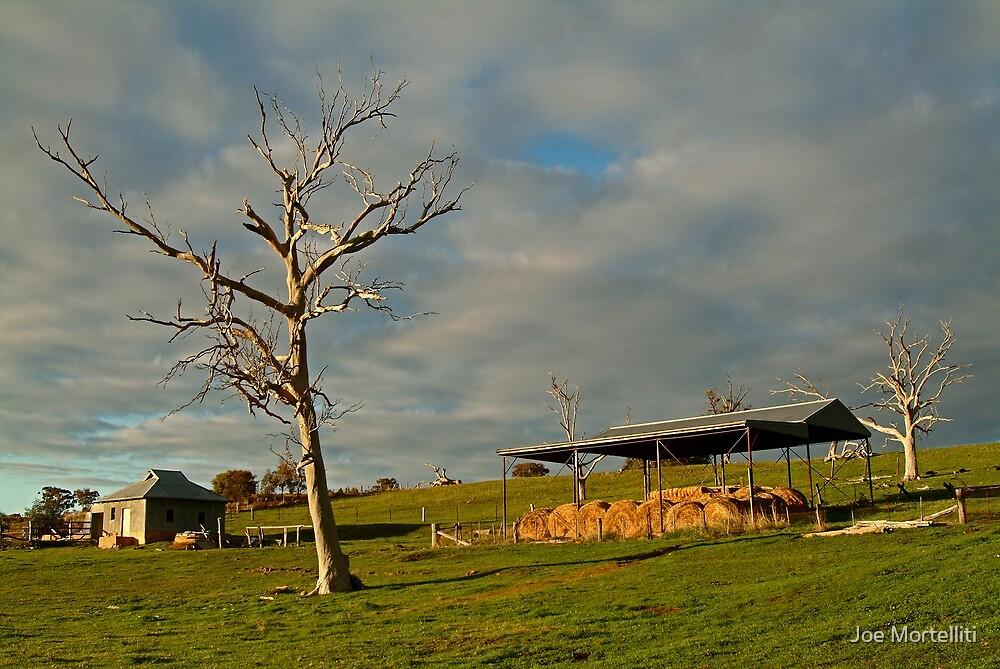Rowsely Valley Farm by Joe Mortelliti