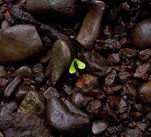 Rocks and Seed by Jeffrey  Sinnock
