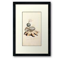 Coloured figures of English fungi or mushrooms James Sowerby 1809 0849 Framed Print