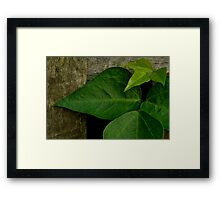 Between the Timbers Framed Print