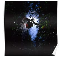 Spider web and leaf Poster