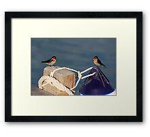 Welcome Swallows, Monkey Mia pier Framed Print