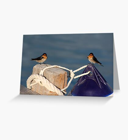 Welcome Swallows, Monkey Mia pier Greeting Card
