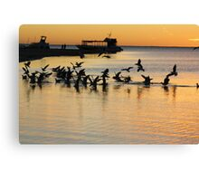 Sea gulls, Coral Bay, sunset Canvas Print