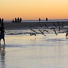 Sea gulls 4, Coral Bay, sunset by ladieslounge