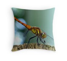 Dragon Sonata Throw Pillow