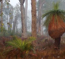 Fog In Frankland Bush by Eve Parry