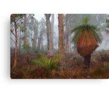 Fog In Frankland Bush Canvas Print