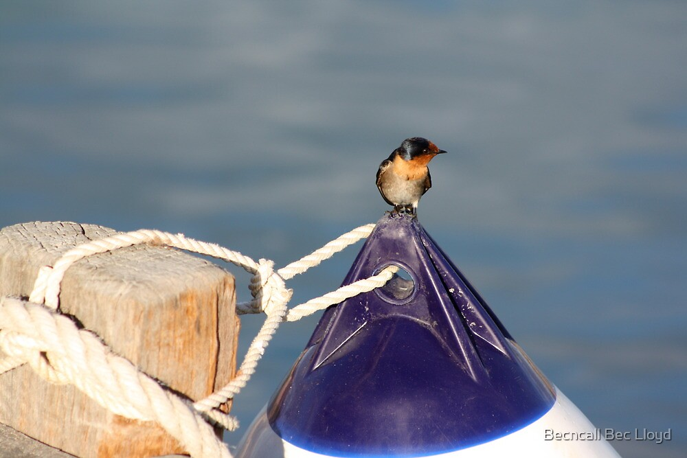 Welcome swallow 2, Monkey Mia jetty by Becncall Bec Lloyd