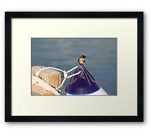 Welcome swallow 2, Monkey Mia jetty Framed Print