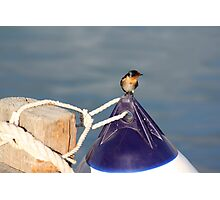 Welcome swallow 2, Monkey Mia jetty Photographic Print