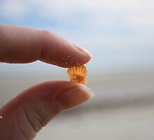 Shell/North Beach by erinerinerin