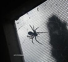 Spider by erinerinerin