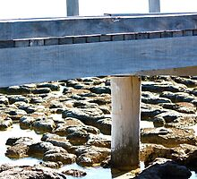 Hamelin Pool, stromatolites under boardwalk by ladieslounge