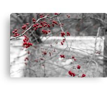 Winter Berries of Arrowtown Canvas Print