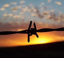 Barbed Sun by Penny Kittel