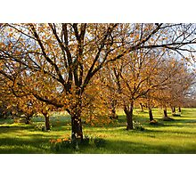 Autumn in the Orchard Photographic Print