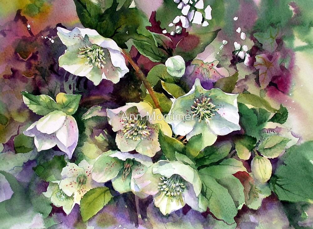 Spring Hellebores by Ann Mortimer