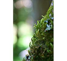Green Curls Photographic Print