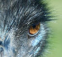 Emu Dude in Whiteman Park by Heather-Jayne
