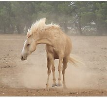 Bucking Dust! Photographic Print
