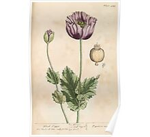 A curious herbal Elisabeth Blackwell John Norse Samuel Harding 1739 0582 Black Poppy Poster