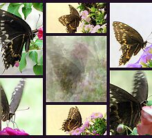 Swallowtail Butterfly Collage by DottieDees