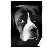 Arwen - Female Boxer Dog - Boxer Dogs Series Poster