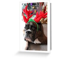 Reindeer This Year?...... Anything For That Cookie! - Boxer Dogs Series Greeting Card