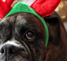 Reindeer This Year?...... Anything For That Cookie! - Boxer Dogs Series Sticker