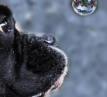 It's A Bubble -Boxer Dogs Series- by Evita