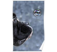 It's A Bubble -Boxer Dogs Series- Poster
