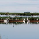 Docked Canoes by Larry Trupp